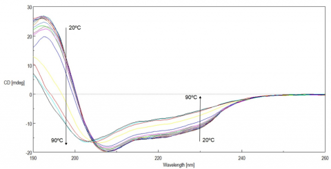 Temperature-Dependent Circular Dichroism spectra of lysozyme from 20 to 90ºC.