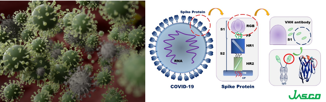 Coronavirus molecules (left) and cartoon schematics of the spike proteins and VHH antibody structures.